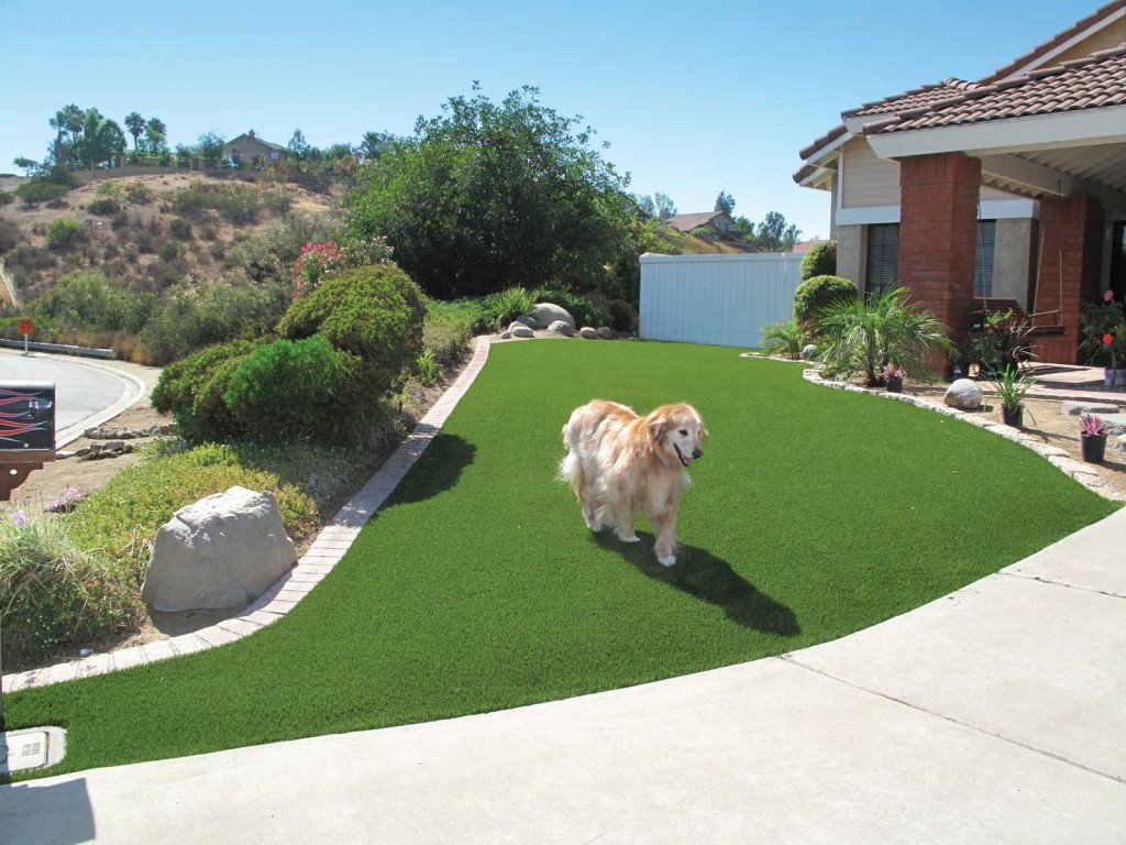 Give your dog the home he needs easyturf artificial grass for Every dog needs a home