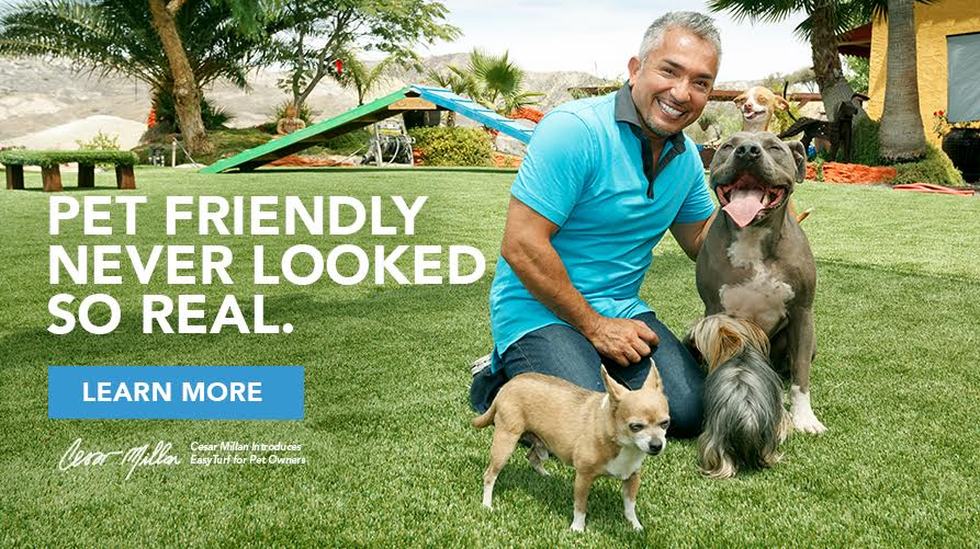 Cesar Millan Artificial Turf