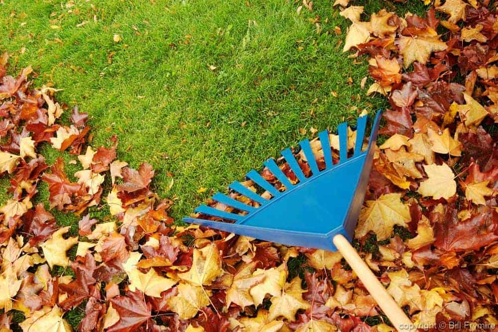 rake-leaves-horizontal.jpeg