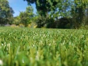 event lawns, theme park grass