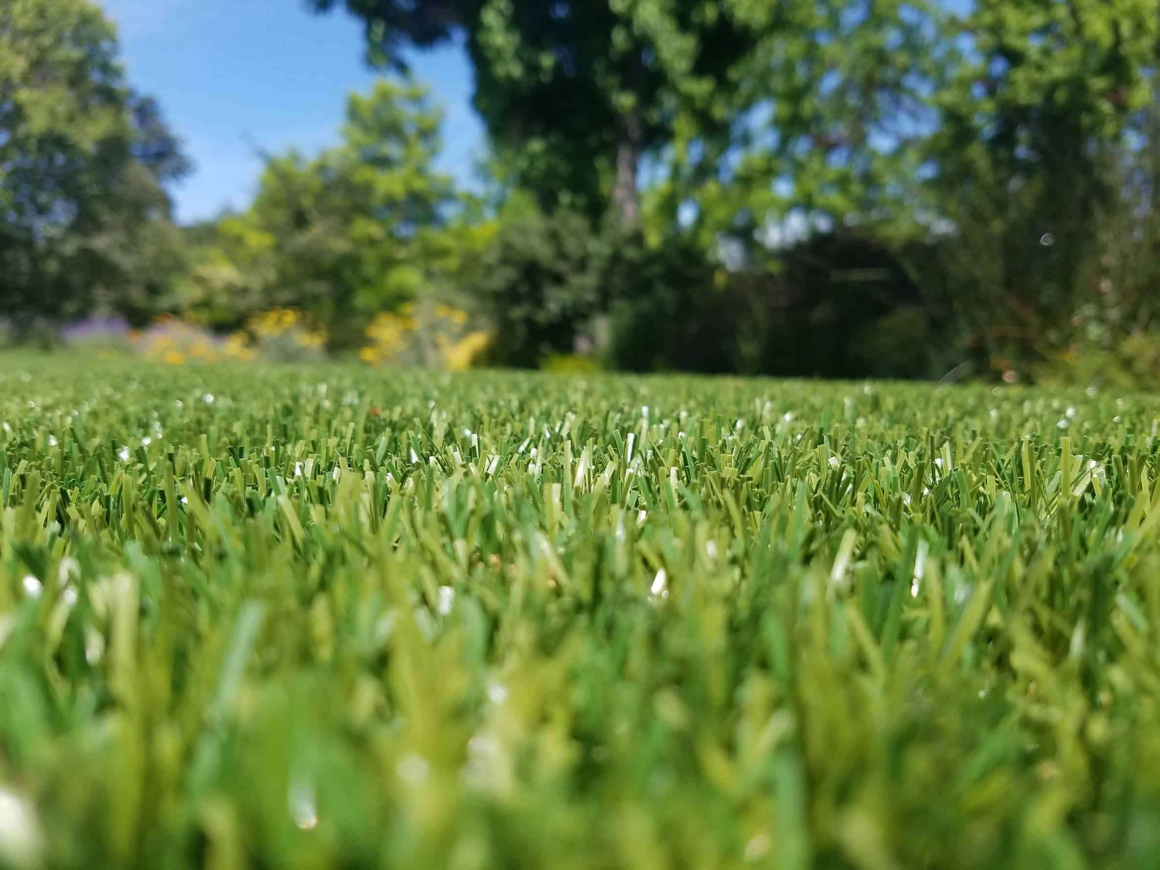 Why Our Artificial Grass Is The Best Easyturf